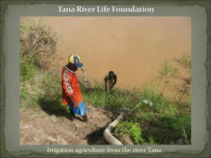 Irrigating the crops with water from the river Tana