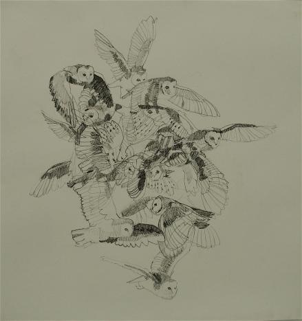 Studying the Barn Owl by Khairullah Rahim