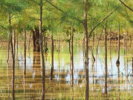 Flood waters - Tana River 2013